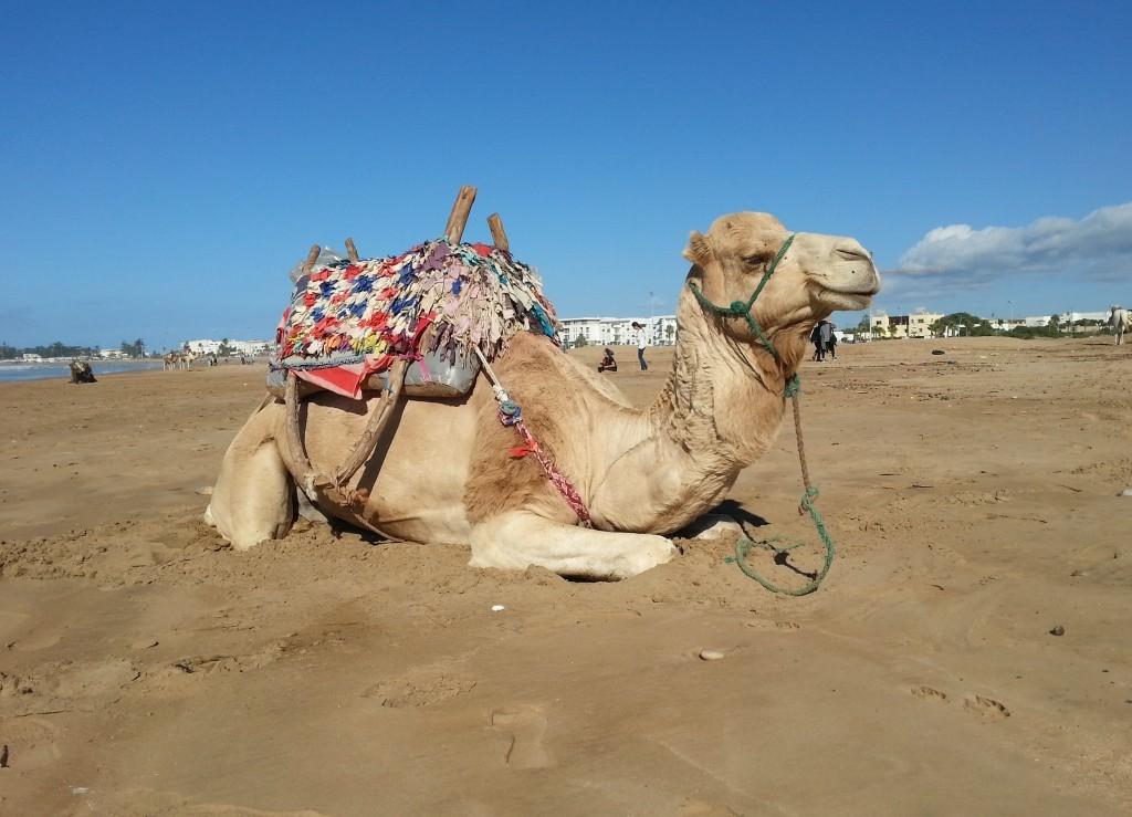 As-Sawira. Wspaniałe plaże rozciągają się zarówno na północ jak i na południe od miasta.
